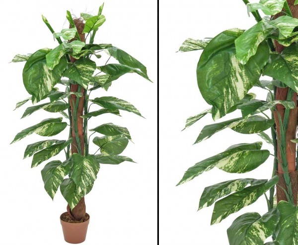 Pothos, am Stamm mit 40 Blätter, Höhe 150cm