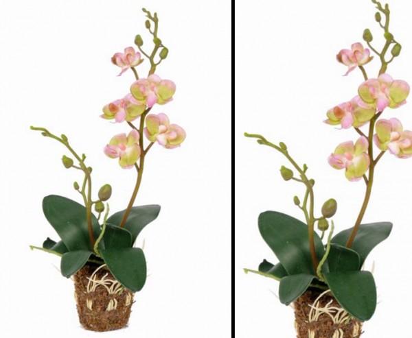 Orchidee künstlich mit 5 grün/ rosa farbigen Blüten und 7 Blättern, Höhe ca. 32cm