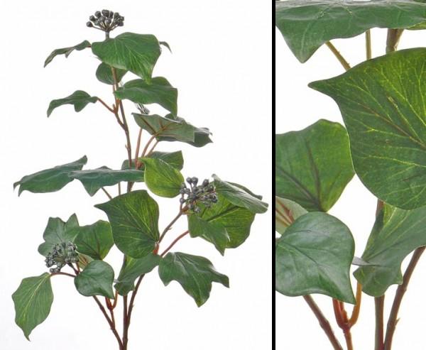 Efeuzweig Hedera taurica Gattung mit 3 Ästen, 24 Blätter, 67cm