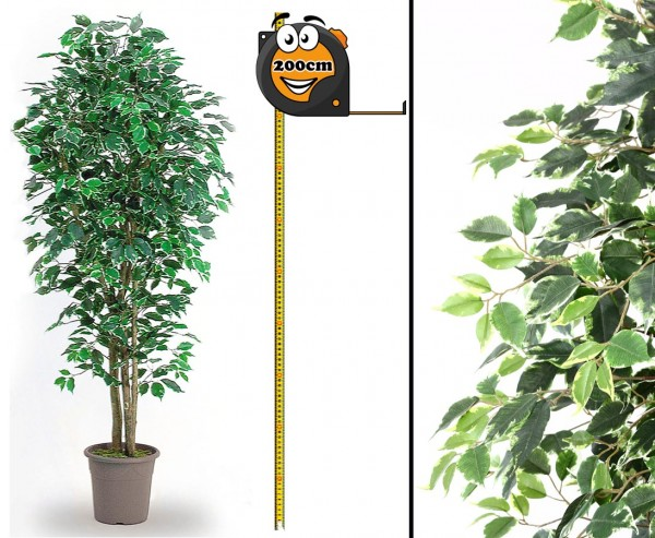 Ficus Kunstbaum Elegance 200cm mit grün-weißen Blätter und Naturstämme
