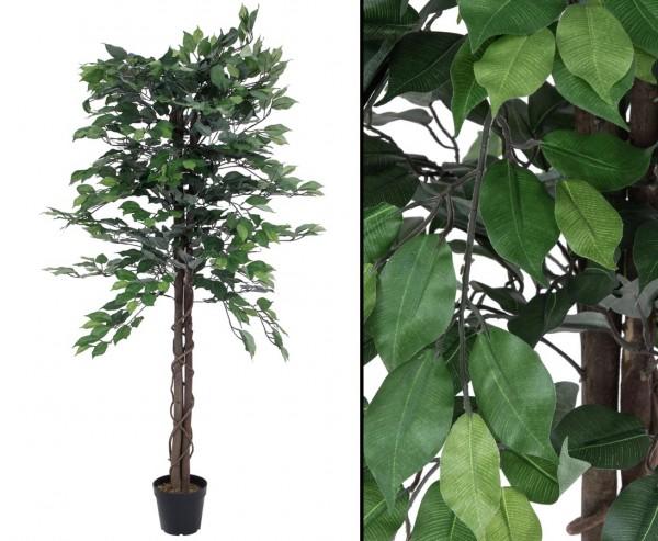 Ficus Benjamini 150cm Multi Stamm natur 1116 Blätter