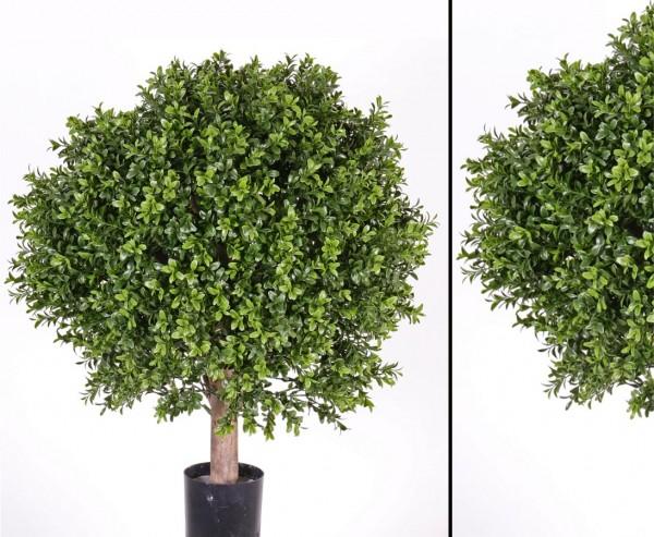 Buchskugel auf Echtholz Stamm mit 1548 Blätter, Höhe ca. 60cm, Kugel Durch. ca. 45cm