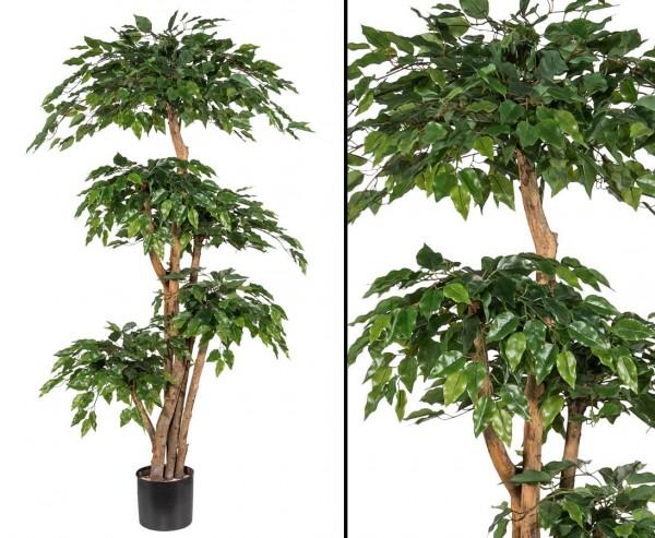 Ficus Kunstbaum mit 5 Stämmen in Natur und Blattkronen Höhe 170cm, Neues Modell