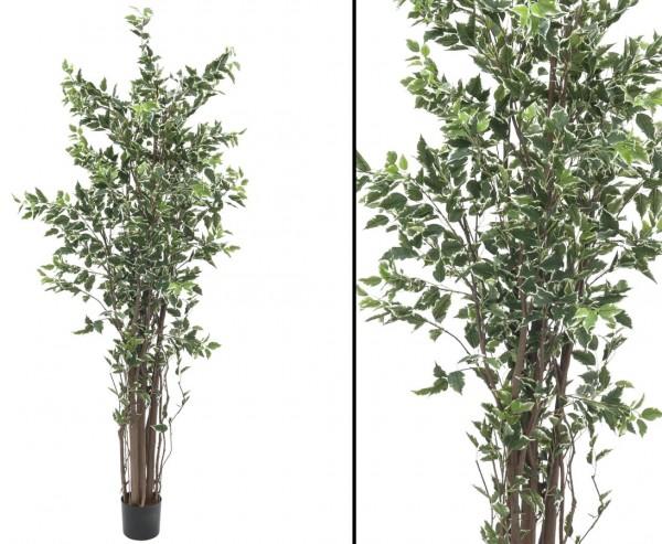 Künstlicher Baum Ficus Benjamini mit 1386 Blätter 210cm
