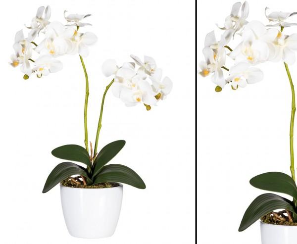 Orchideen Kunstblume mit 2 creme weiß farbigen Blüten 50cm, neues Design