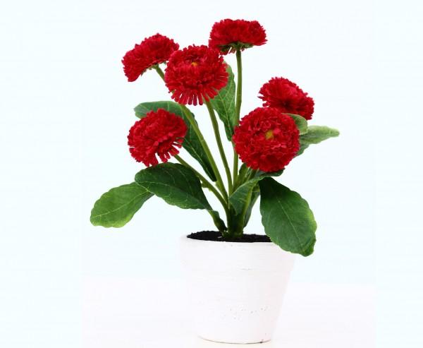 Kunstblume Bellis perennis Gänseblümchen im rot mit Topf, 19cm hoch