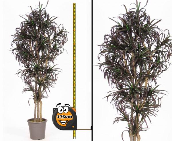 Yucca Kunstpalme mit 672 Blätter verschieden farbig 175cm hoch mit Naturstämme