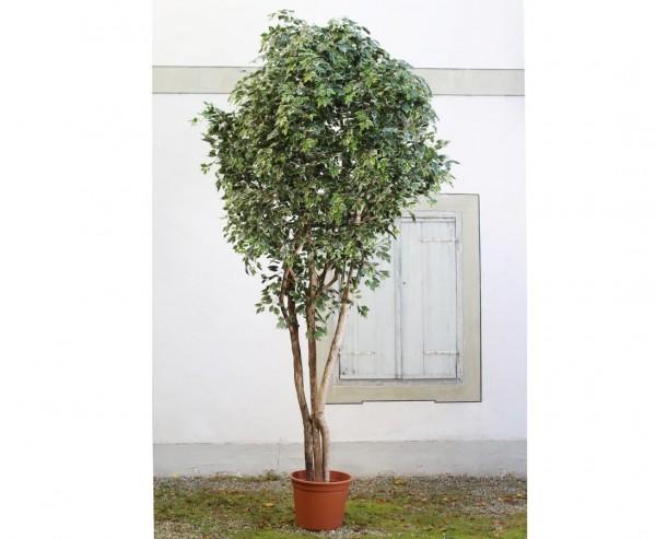 Ficus Kunstbaum XL mit Naturstämmen 300cm mit Zementtopf und grün weiße Blätter