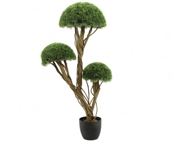 Grashalbkugelbaum mit 3 Stämmen im Topf Höhe ca. 126cm