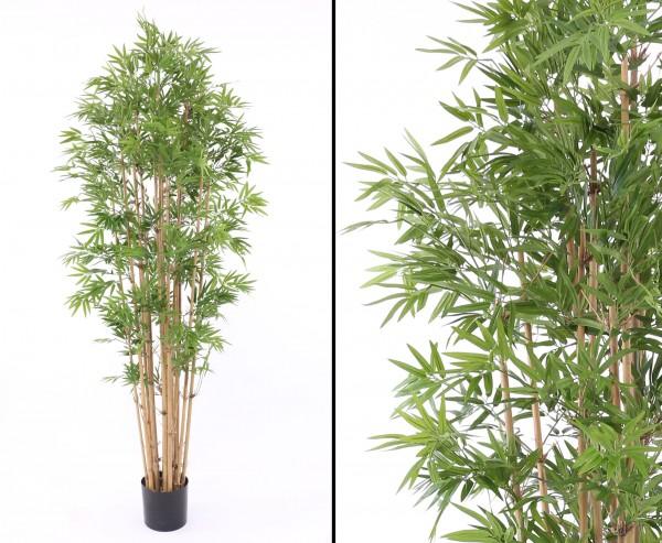 Bambus, schwer entflammbar 3360 Blättern, Höhe ca. 210cm mit Topf