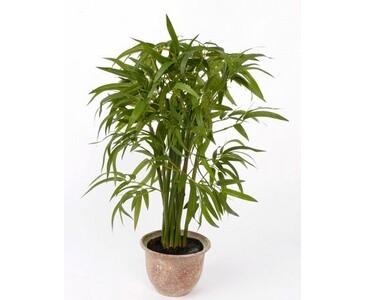 Kunstpflanzen Discount bambus höhe 60cm durch ca 40cm hier günstig bestellen