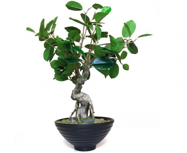 Künstlicher Bonsai Ficus 48cm mit 110Blätter im schwarzen Keramiktopf