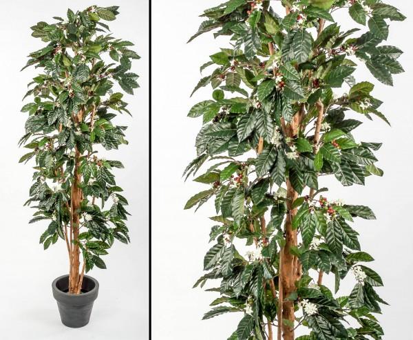 Kaffeebaum künstlich mit Früchten und Blüten Höhe 210cm