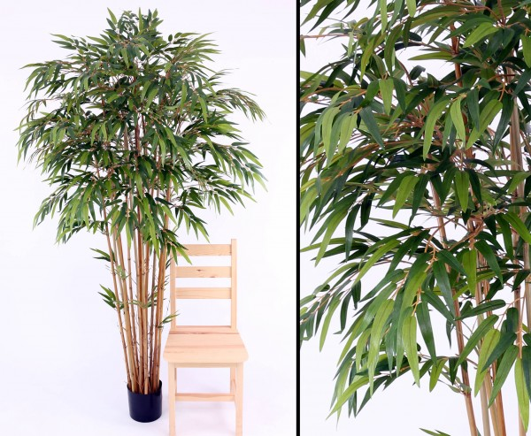 Bambus mehrstämmig mit ca. 2240 Blätter, Höhe 210cm