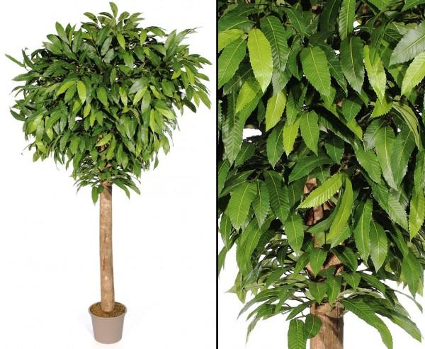 Kunstbaum Kastanie mit 280cm 1840 Blätter und dicken Echtstamm