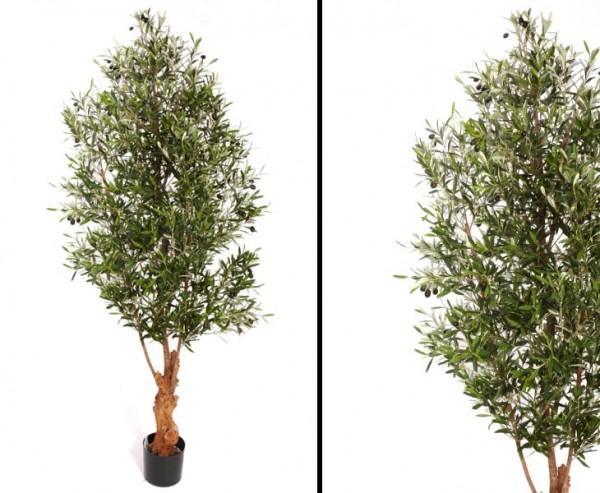 Olivenbaum 200cm mit ca. 5720 Blättern 168 Oliven und Naturstamm