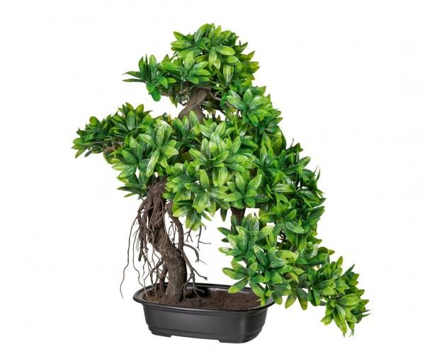 Kunstpflanze Bonsai Ruscus im Kunststofftopf mit einer Höhe von 57cm