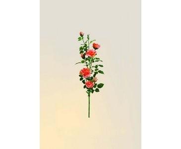 Rosenzweig, pink, 92 Blätter und 8 Blüten, 90cm