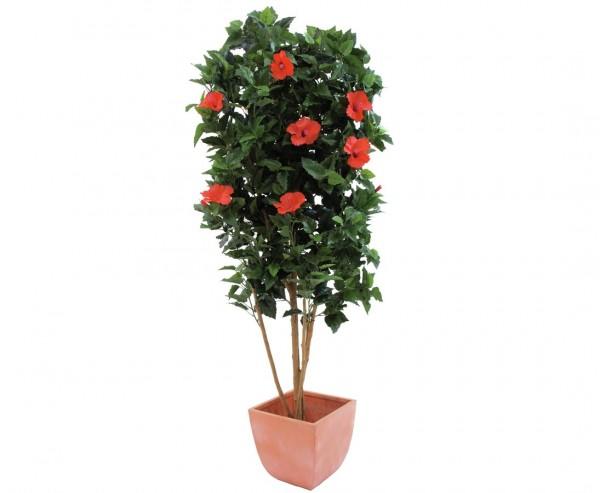 Hibiskusbaum, Naturstamm, 1057 Blätter, 150cm