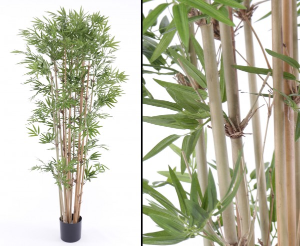 Bambus, schwer entflammbar, mit 1440 Blätter, Höhe ca. 150cm mit Topf