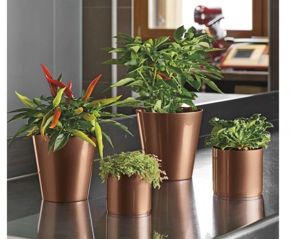 Pflanzgefäß für Pflänzchen und Kakteen Kupfer farbig mit H:12cm und Ø13cm aus PP