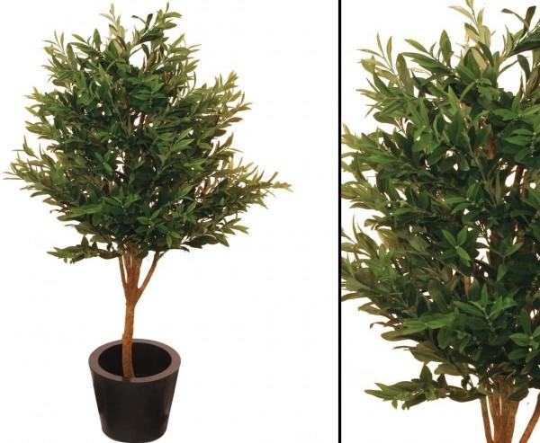 Olivenbaum mit Naturstamm 2560 olivgrüne Blätter Höhe 160cm