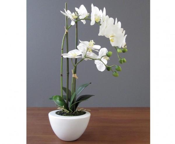 Orchideen Kunstblume mit 2 creme weiß farbigen hängenden Blüten 50cm gefühlsecht im Topf