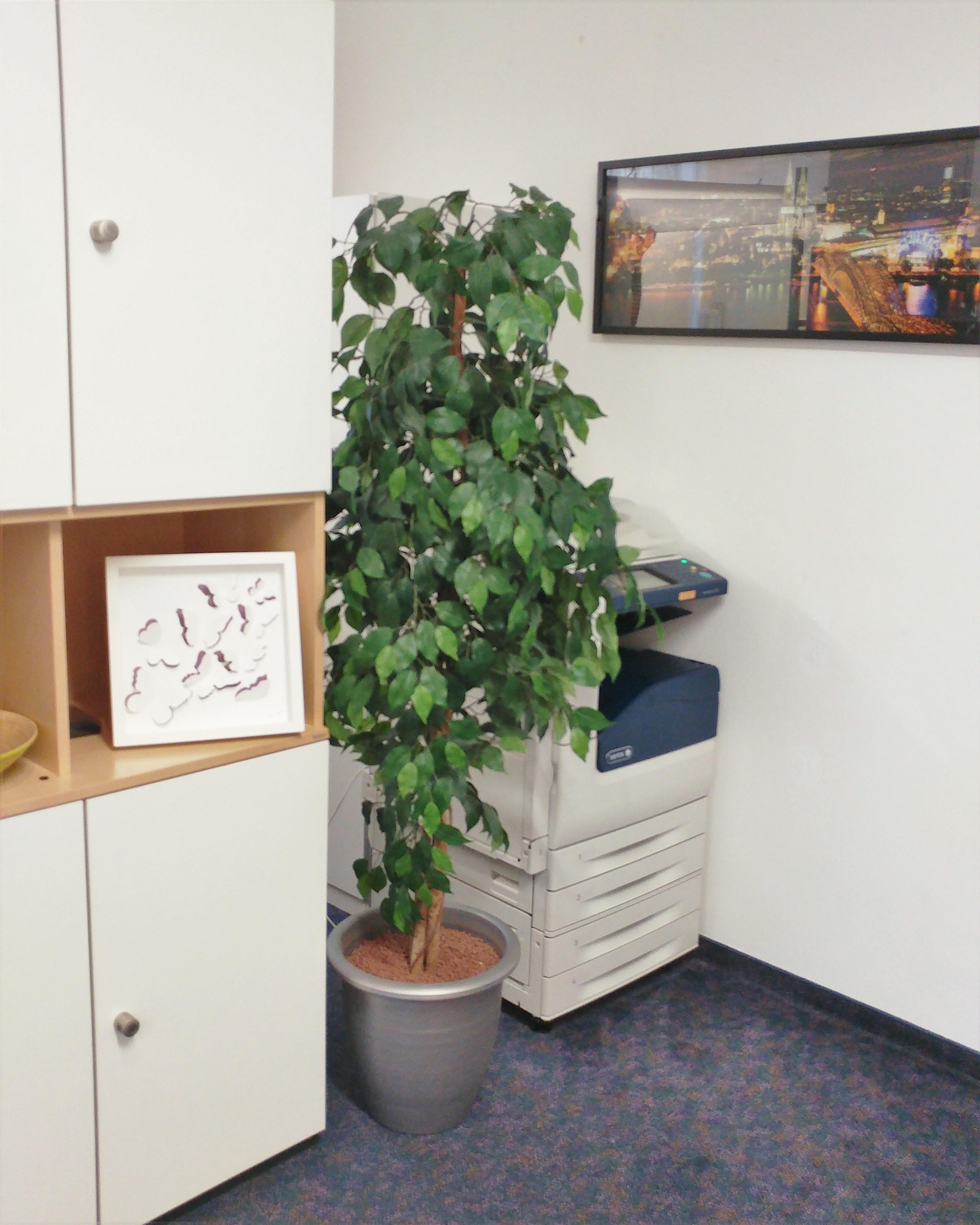 Kunstpflanzen Im Büro So Setzen Sie Kunstpflanzen Im Büro Ein