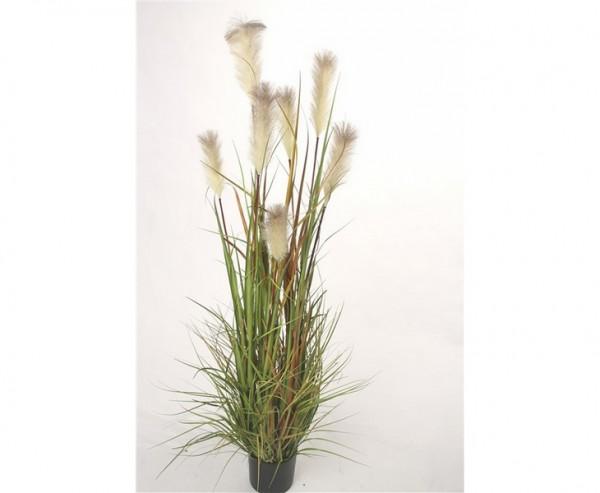 kunstpflanze schilfgras mit 180cm g nstig im shop kaufen. Black Bedroom Furniture Sets. Home Design Ideas