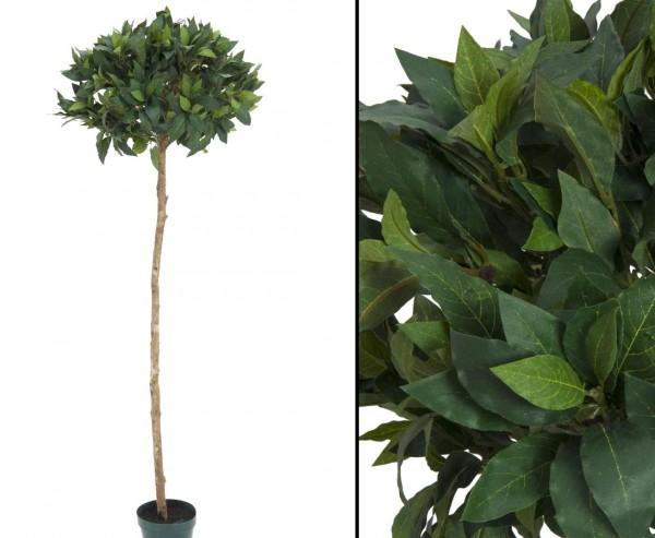 Lorbeerkugelbaum Textilpflanze mit 900 Blättern Höhe 180cm