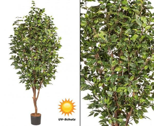 Kunstbaum Ficus 220cm mit 2064Blätter UV-beständig