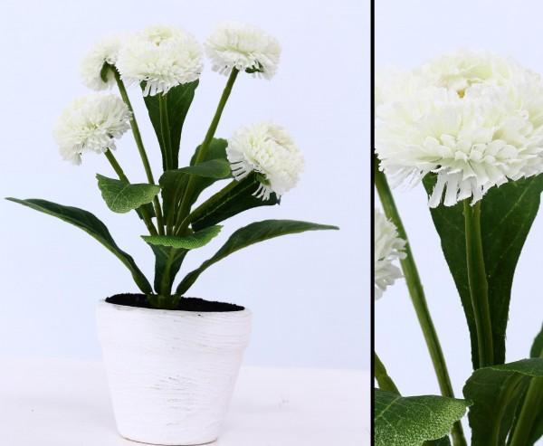 Künstliche Bellis perennis Gänseblümchen in weiß-creme im Topf, 19cm hoch