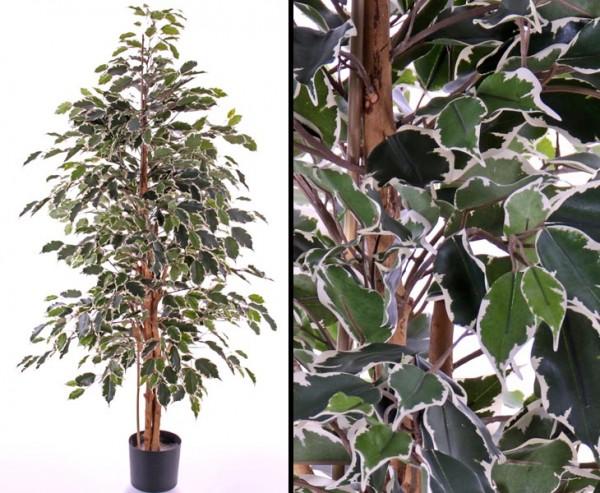 Künstlicher Ficus exotica mit bunten grünen Blättern Höhe ca. 150cm