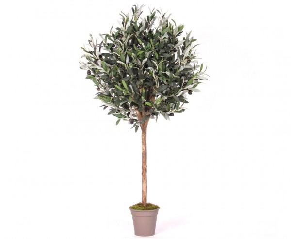 Olivenbaum 125cm kugelform Ø 40cm mit 640 Blätter und 60 Oliven