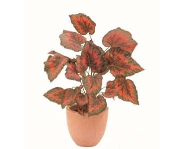 Buntnessel, Dekopflanze grün/rot mit Samtoberfläche, 24 Blätter