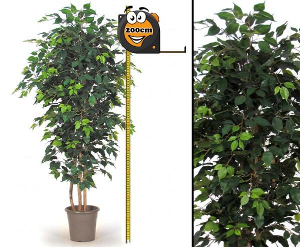 Kunstbaum Ficus 200cm hoch mit grünen Blättern und Naturstämmen