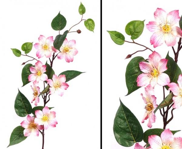 Waldreben Clematis, mit 7 Blüten rosa, Höhe 80cm