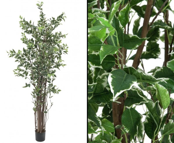 kunstbaum ficus benjamini 1892 bl tter 240cm g nstig kaufen. Black Bedroom Furniture Sets. Home Design Ideas