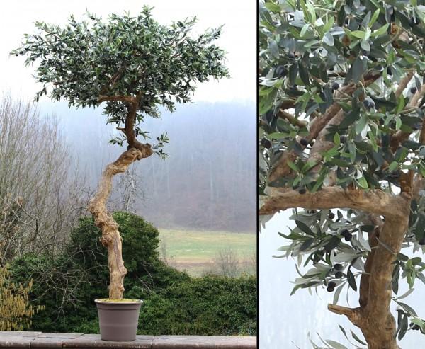 Künstlicher Olivenbaum in Schirmform 275cm hoch