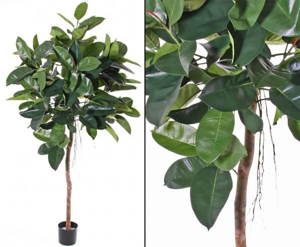 Künstlicher Ficus Gummibaum Höhe ca. 180cm