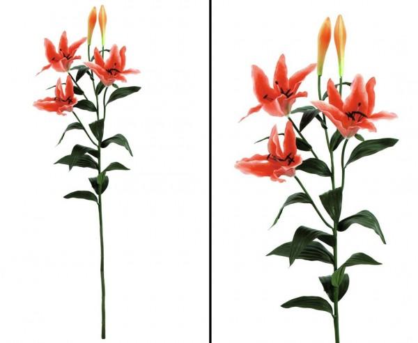 Tigerlilie mit orangen Blüten und 2 Knospen Höhe 97cm