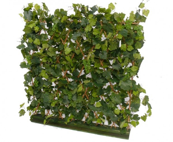 Traubenblatthecke, mit ca. 22 Weinreben, 983 Blätter, Höhe ca. 120, Breite 110cm