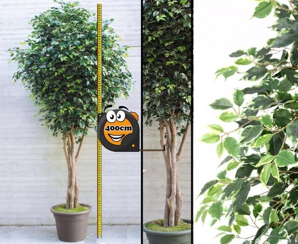 Ficus Kunstbaum XL mit 10.032 Blättern und Naturstämme 400cm mit Topf