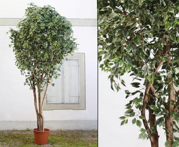 Ficus Kunstpflanzen Baum XL 450cm Naturstämme und Topf
