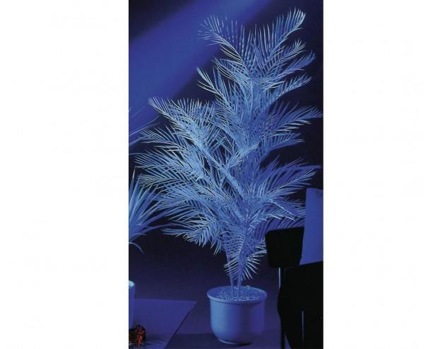 Kentiapalme 1-fach, uv-weiß, 90cm