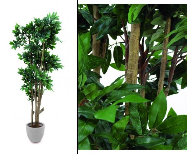 Mittelmeer Waldbaum viele einzelne Blätterkronen Höhe 180cm