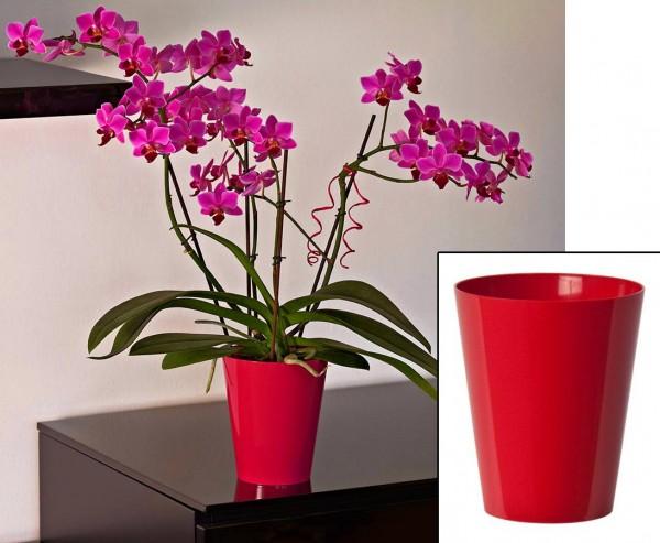 Vase für Orchideen in der Farbe Rot mit H:15cm und Ø12,5cm aus PP Material