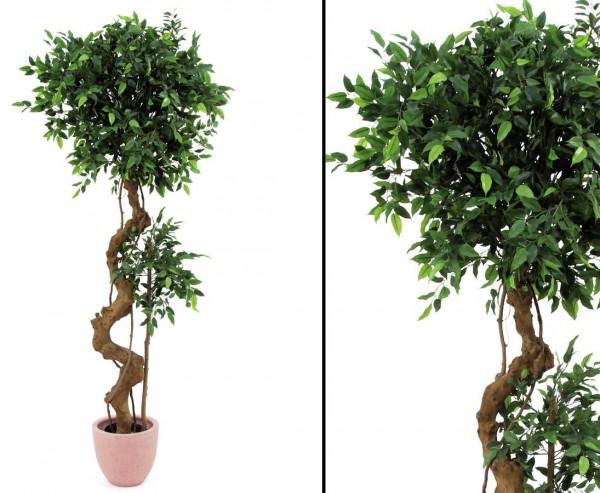 ficus bonsai deko baum mit naturstamm 170cm g nstig shoppen. Black Bedroom Furniture Sets. Home Design Ideas