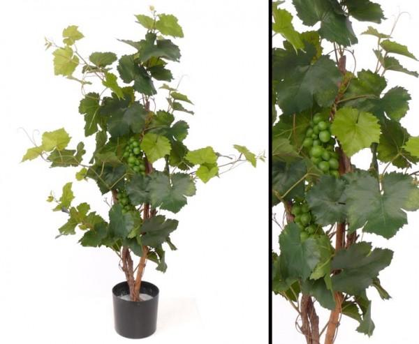 Traubenpflanze mit 2 Traubenbündel ca. 79 Blätter Höhe ca. 90cm