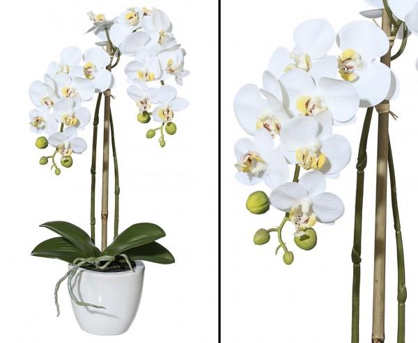Orchideen Kunstblume mit 2 creme weiß farbigen Blütenzweigen 57cm gefühlsecht im Topf